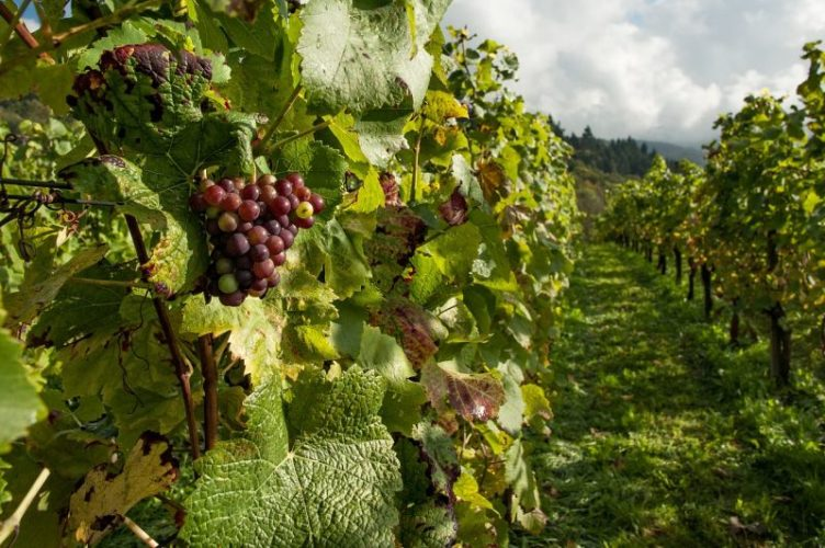 Explore England English Vineyard